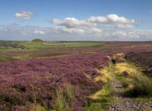 Heather_moorland_on_the_North_York_Moors